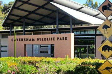 Visit-Caversham-Wildlife-Park-this-January-2014